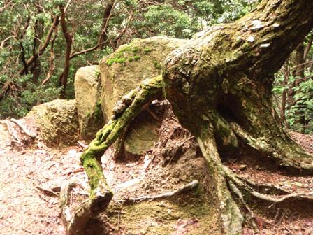 20110731-26木のこぶ?