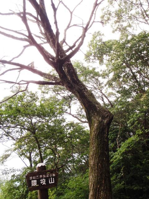 20110731-12山頂の木