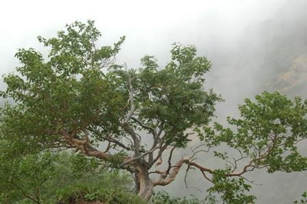 20110811-6文三郎尾根道の木
