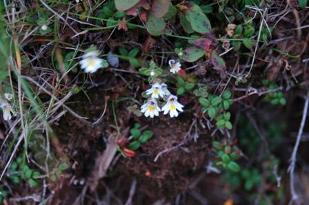 20110811-7小さな白い花