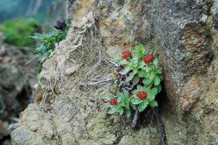 20110811-8登山道の花赤