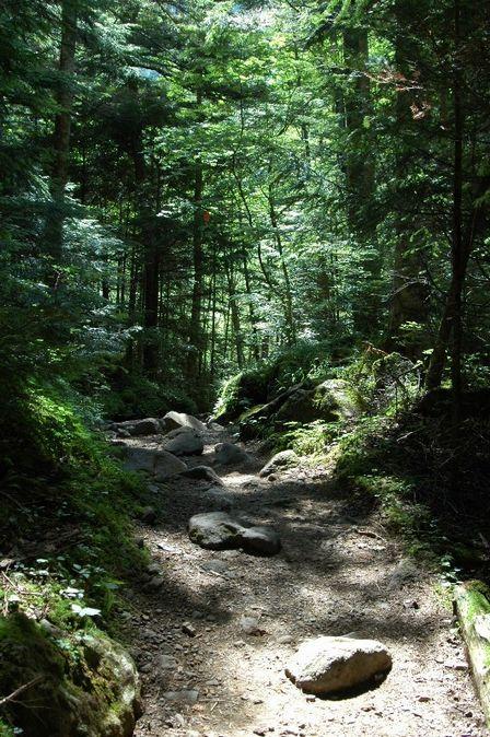 20110812-9登山道