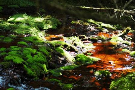 20110812-9赤い水と苔