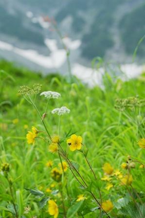 20110816-6 涸沢ヒュッテ、花3