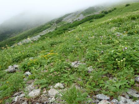 20110817-2 涸沢、雪渓手前、お花畑