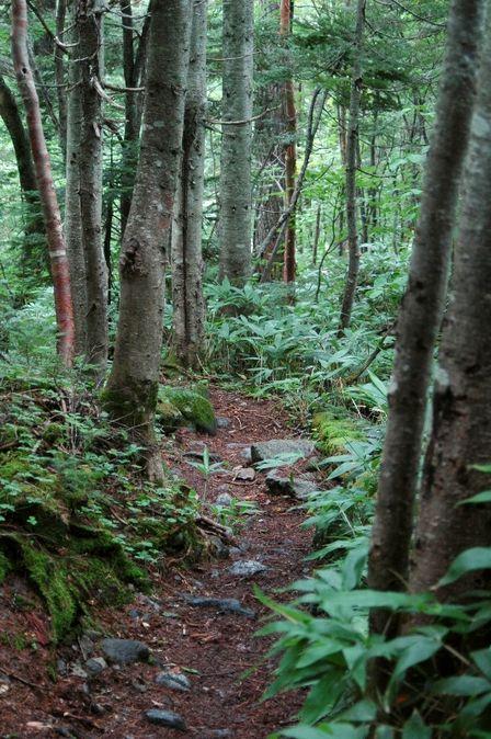 20110818-8 樹林帯 再び 縦