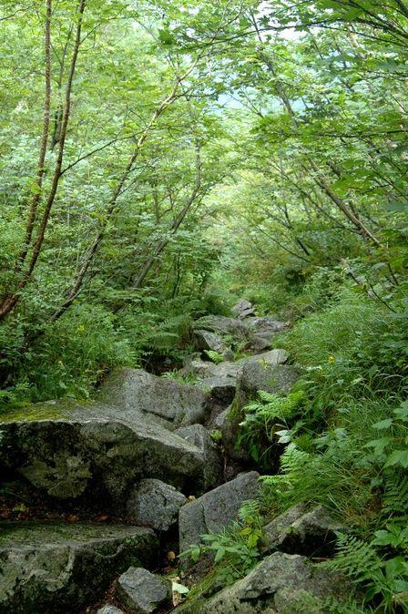 20110818-8 樹林帯 振り返る 縦