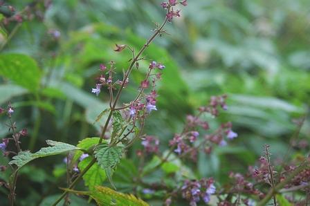 20110923-03紫のお花.jpg