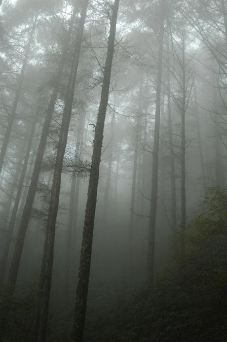 20110923-03ガスが濃く.jpg