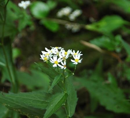 20110923-03白のお花.jpg