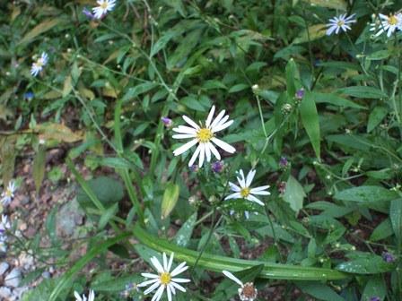 20110930-12お花