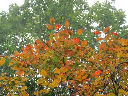 20110930-21小さい秋見つけた