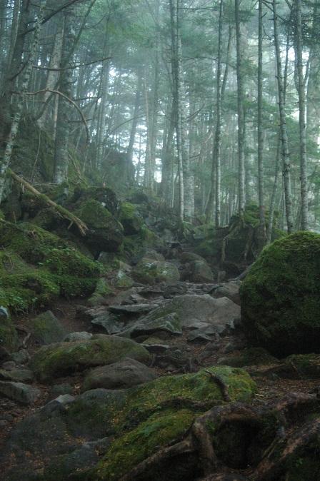 20111001-05稜線歩きのガスは嫌いだけど、樹林帯のガスは嫌いじゃない