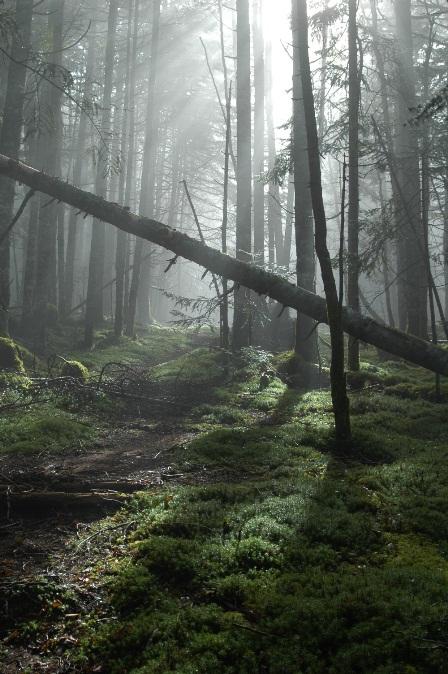 20111001-09森の目覚め2