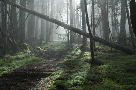 20111001-09森の目覚め