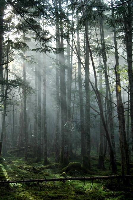 20111001-11光のカーテン2