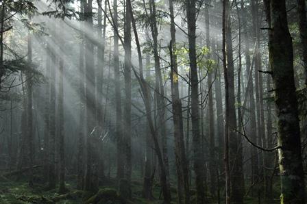 20111001-11光のカーテン