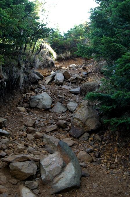 20111001-15文三郎樹林帯