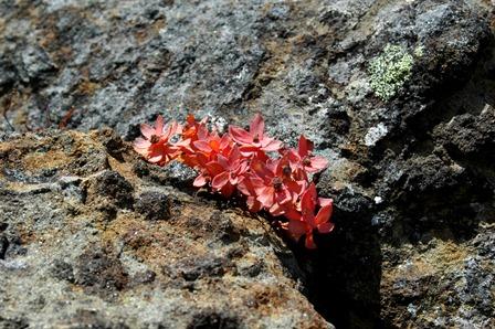 20111001-24赤岳岩稜5植物