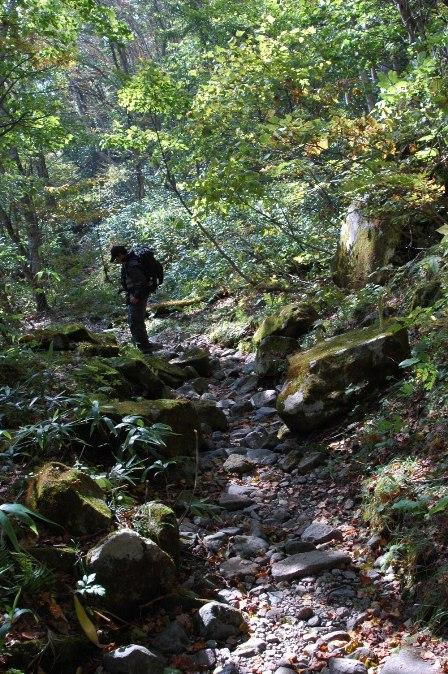 20111008-29樹林帯
