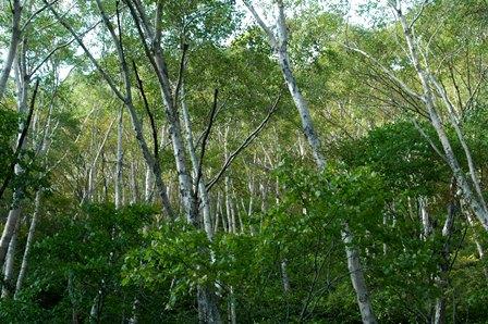 20111008-30樹林帯2