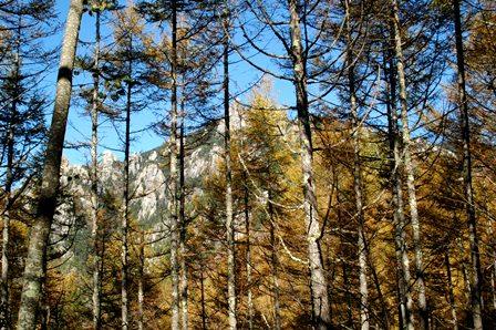 20111030-05林越しの瑞牆山
