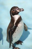 ペンギンs