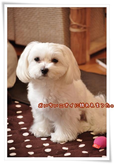 DSC_0004_20120227224059.jpg