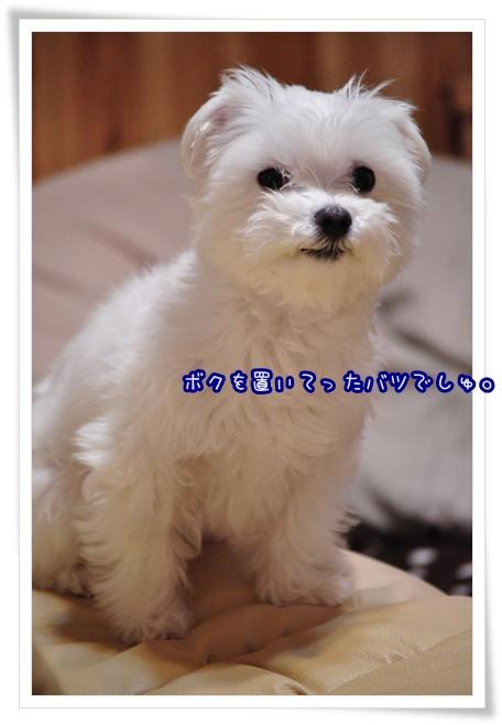 DSC_0292_20120227223211.jpg
