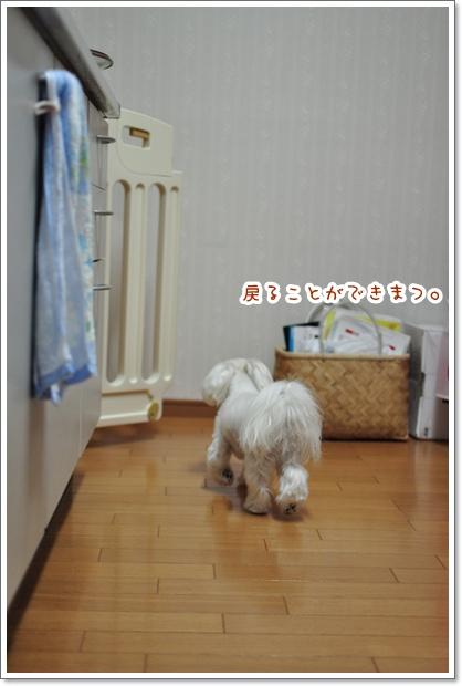 DSC_0842_20120118220433.jpg