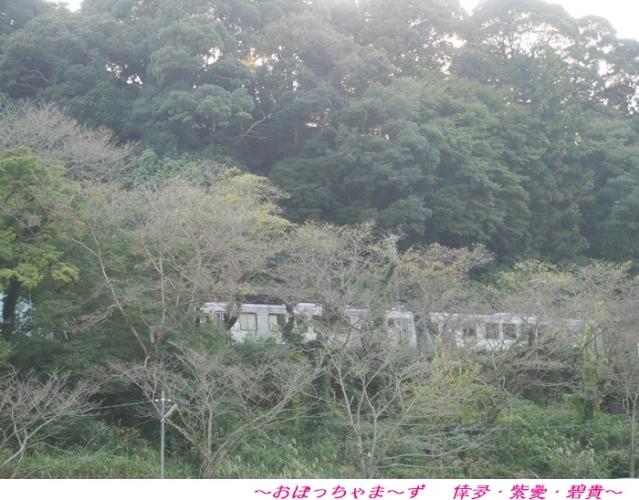 PA130834-1.jpg