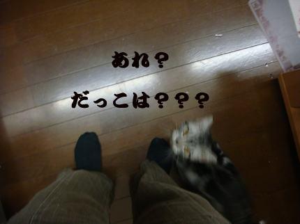 だっこは?