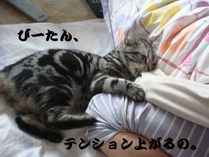 テンション↑↑