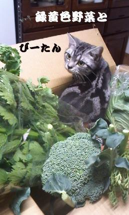 野菜とびー