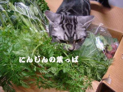 にんじんの葉っぱ
