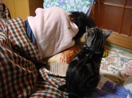 びぃ、うたた寝の姉を見る