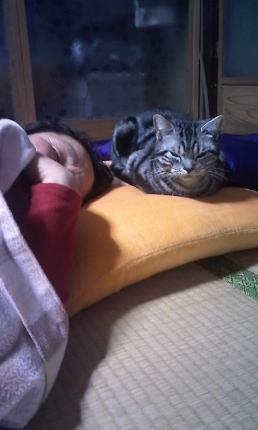 びー母とうたた寝