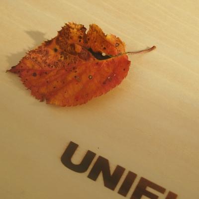 秋を感じる1枚