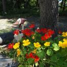 キレイに咲いていました