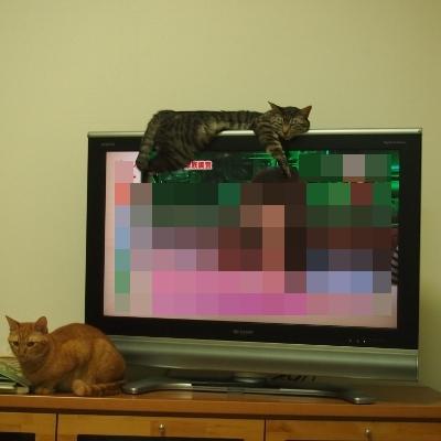 テレビに集中出来ません(^^ゞ