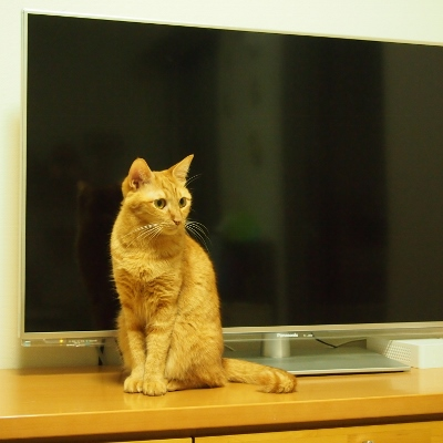 テレビが小さく見える…