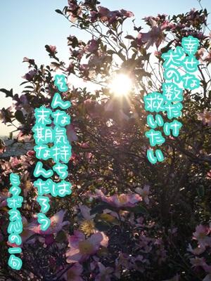 川柳P1330464