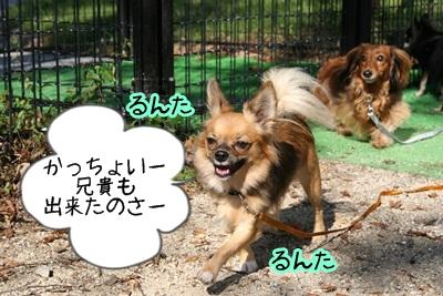 こそきちIMG_2009