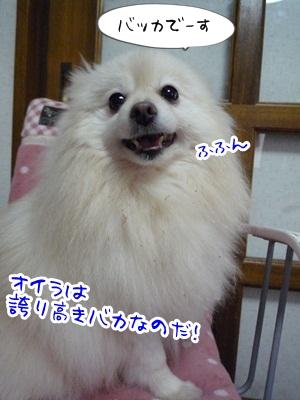 はるP1340691
