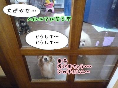 幸子P1340727