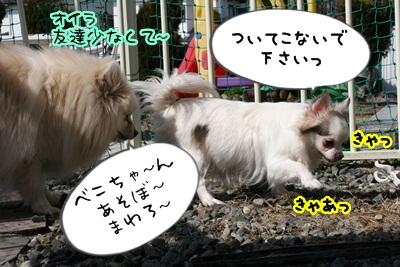 べこIMG_2671
