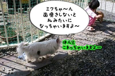 べこIMG_2640