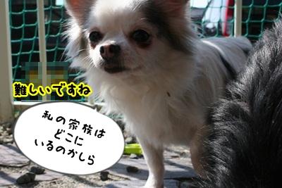 べこIMG_2646