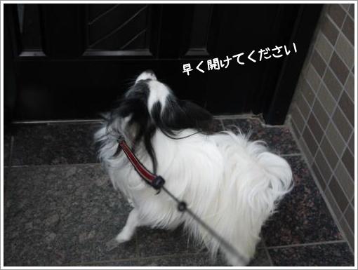006_convert_20130218092616.jpg