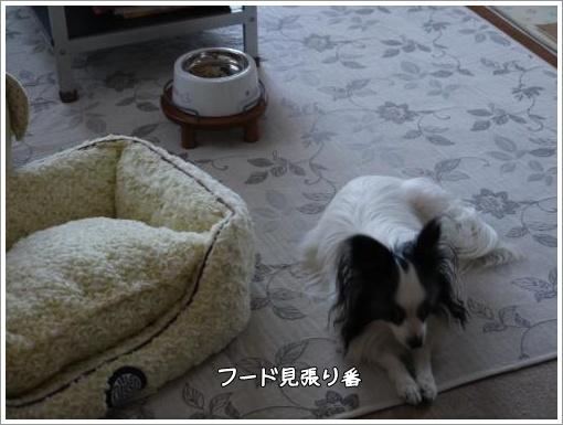 010_convert_20130227092120.jpg